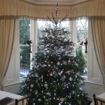 Abbeyfields Christmas Tree