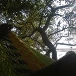 Just hanging. My secret hammock spot by the river.