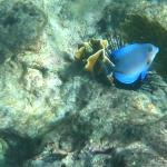 Snorkeling at Champagne Reef
