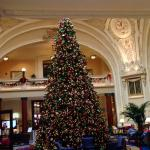 Beautiful tree in lobby