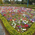 Photo of Dalat Flower Park
