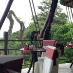 Monkey visit during breakfast