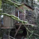 Foto de Treehouse Point