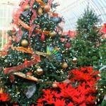 Phipps during the holiday season