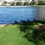 Ducks along Lake Carolyn which is nestled against the hotel
