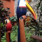 toucans in the bar area