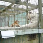 very bad conditions for the animals