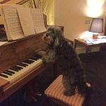 ROMEO PLAYING PIANO FOR THE GUESTS
