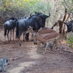 game drives on site