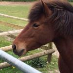 This little beauty is my youngest's favourite, Summer, stunning Eriskay mare wih an attitude heh