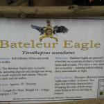 Eagle Heights Gambia