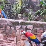 Sharing the garden with the parrots