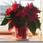 Holiday decor in a sunny front window at Ray's Family Restaurant