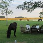 Cattle and horses grazing to the rear of the estancia