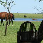 Horses grazing by the estancia
