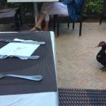 Ducks in the dining area