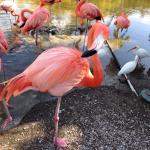 The flamingos. you are able to feed them.