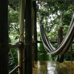 Foto de La Loma Jungle Lodge and Chocolate Farm