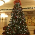 Live Christmas Tree in Lobby!! Beautiful!!