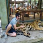 Tiger Kingdom Foto