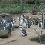 Photo de Zoo Basel