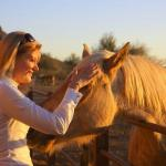 Sunset affection at the horse corral