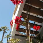 exterior stairway and bougainvillea