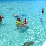 Siki guides tourists in stingray encounter