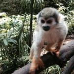 Up, close and personal with the squirrel monkeys