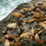Sea lions everywhere!