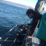 """White Shark Diving at Gansbaai isn't really """"diving"""" - it's holding breath inside the cage!"""