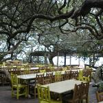 The restaurant was nestled in a milkwood forest