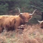We met these brutes along our walk.