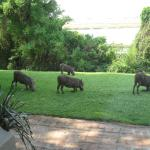 Chobe Game Lodge resmi