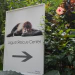 Foto de Fundación Jaguar Rescue Center