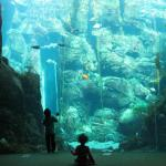 The amazing aquarium