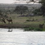 Wildlife view at the watering hole from the hotel.