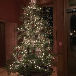 The Christmas tree in the lobby