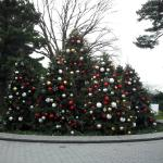 Holiday Cheer at the NYBG