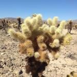 BEST WESTERN Gardens Hotel at Joshua Tree National Park Foto
