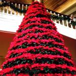 One of the famous poinsettia trees found in the Magnolia Lobby