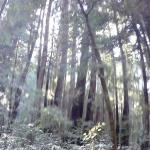 Photo of Armstrong Redwood State Reserve