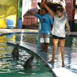 Dolphine Show