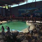 Penguin feeding at the Discovery Centre
