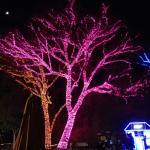 Trees in Lights