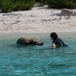 The reason I came to Bahamas - To swim with the pigs