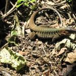 Photo of Rainmaker Park