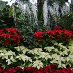 Allan Gardens Conservatory Christmas Flower Show 2014 by garden muses-not ano
