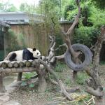 Photo of Chimelong  Xiangjiang Safari Park