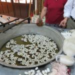 Silk cocoons for spinning